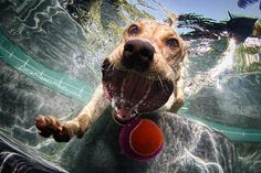 Dog under water going after ball. never relized wht they looked like going after a ball lol
