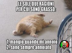 Gatto, noia e grasso Funny Images, Funny Photos, Michael Jackson Meme, Funny Chat, Italian Memes, Serious Quotes, Cat Pose, Funny Phrases, Funny Comics