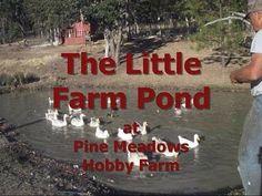 The Little Farm Pond at Pine Meadows Hobby Farm