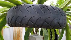 How to choose the right type of tire for your dragon fruit trellis top support Dragon Fruit Tree, How To Grow Dragon Fruit, Fruit Plants, Fruit Trees, Diy Trellis, Home Decor Styles, Home And Garden, Cottage Gardens, Type