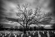 ara güler mezarlık ağaç fotoğraf