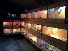 wall of reptile enclosures