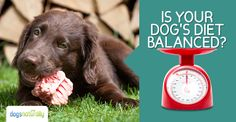Balance your raw-fed dog's calcium:phosphorous nutrient levels by feeding raw bones. Figure out just how much to give by with this easy to follow breakdown.