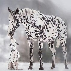 #Repost @capochino67:@Regrann from @corno_gabriele -  We  Black & White #awesome #amazing #cool #colors #magic #majestic  #lit #light #love #life #Hope #Harmony #Horizons #Idyll #Imagine #Inspired #Incredible #Follow #PhotOfTheDay #Wonderland #Fairytale #horse #dog #snow #enchanted #mesmerizing #dalmata - #regrann