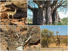 15 things to do at Mapungubwe National Park - Roxanne Reid Classroom Expectations, World Heritage Sites, Things To Do, National Parks, Bucket, Plants, Things To Make, Plant, Buckets