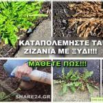 Αντιμετωπιστε τα Ζιζανια με Ξυδι! Ενας Βιολογικος Τροπος Που Δεν Γνωριζατε! Διαβαστε Πως! Herbs, Herb, Medicinal Plants