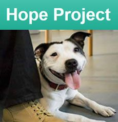 Hope Project helps dog owners who are homeless or in housing crisis, providing advice and free and subsidised veterinary care for their dogs. Homeless Dogs, Helping The Homeless, Dog Charities, Dogs Trust, Veterinary Care, Dog Owners, Adoption, Advice, Dog Stuff