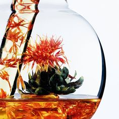 """47 Likes, 2 Comments - Botanicals Fresh Care (@botanicals_freshcare) on Instagram: """" Here is our magnificent #safflower infused in Rich Infusion ! We have to confess, we were…"""""""
