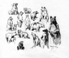 Animal Drawings, Art Drawings, Pencil Drawings, Animal Story Books, Drawing Sketches, Drawing Stuff, Sketching, Bear Images, Prehistoric Animals