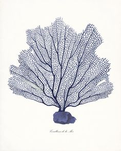 Coastal Decor Indigo Sea Fan Giclee Art Print di vintagebytheshore