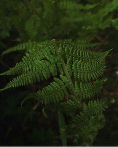 Plant Leaves, Green, Plants, Plant, Planets