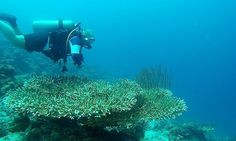 Pro Dive Davao has everything needed for local or visiting divers. Highly experienced and knowledgeable dive guides. Davao, Scuba Diving, Philippines, Boat, Island, Diving, Dinghy, Boats, Islands