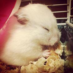 hamster =3