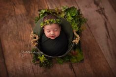 Newborn photography with succulents