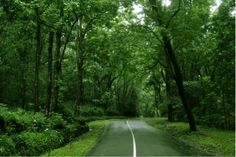 Most of the roads in Kerala pass through these scenic locations and so it makes sense for you to drive through Kerala rather than take the train or a flight.