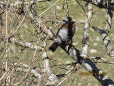 lintu puussa