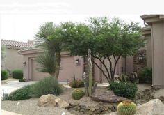 desert landscaping the front yard