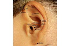auriculoterapia pontos principais - Pesquisa Google