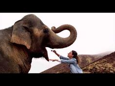 buThis woman is a large-mammal dentist. She considers herself lucky to able to do what she loves on a daily basis. Don't let your dream job become work. Deluxe expertise is at your command. Dream Job, My Dream, Large Animals, Tv Commercials, Mammals, Dreaming Of You, Love Her, Elephant, Let It Be