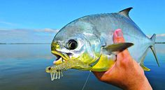 Pompano Fishing in Florida