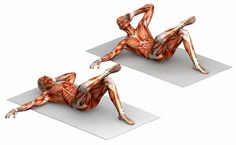 http://www.acefitness.org/blog/5411/10-things-to-know-about-muscle-fibers/?utm_source=SilverpopMailing
