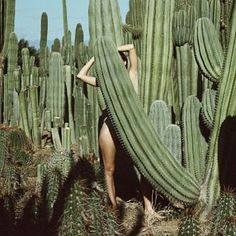 I want all of the cacti