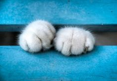 Looks like my Sylvester's paws at bedtime:)