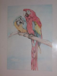papegaaien, aquarelpotlood