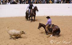 NCHA Cutting Horse Futurity Finals 12.15.12  (c)CydByrd