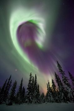 https://flic.kr/p/cmmnKU | Aurora Borealis, Sweden | A beautiful curved band of aurora over snow covered trees in Swedish Lapland.