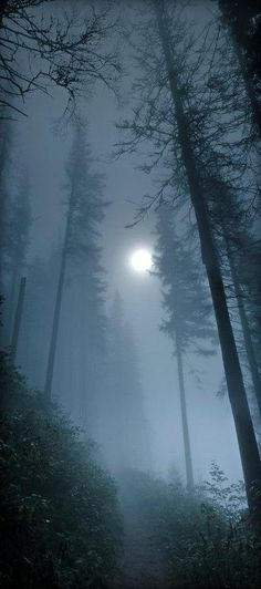 Moon in the Foggy Forest. Nature Photography.