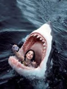 Picture Day lolosbri ello is part of Shark The Picture of the Day - Cool Pictures, Funny Pictures, Photocollage, Picture Day, Great White Shark, Ocean Creatures, Mystic Messenger, Funny Wallpapers, Underwater Photography