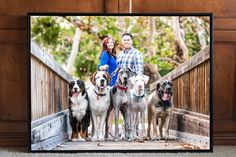 Pricing | San Diego Pet Photography | Westway Studio | Dog Photographer | Cat Photographer | Horse Photographer | San Diego Pet Photographer | Professional Pet Photographer | Commercial Pet Photographer | Professional Pet Photography | Commercial Pet Photography