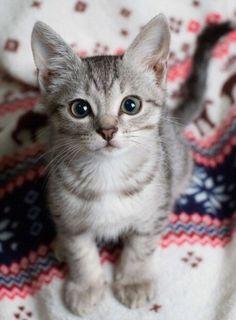Furry friend.   Love her/him !