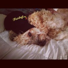 Bailey rockin' the funkycrap hat! Www.funkycrap.com. Cool collectibles and more!