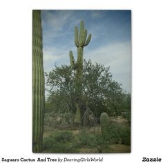 Saguaro Cactus  And Tree Post-it Notes
