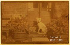 Coleford, United Kingdom 1890 -1899, colección C.H.
