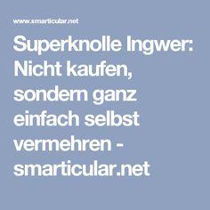 Superknolle Ingwer: Nicht kaufen, sondern ganz einfach selbst vermehren - smarticular.net