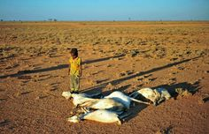 Somalia reports 110 deaths from drought over 48 hours