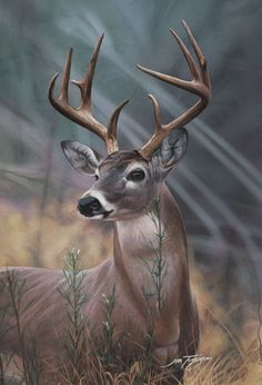 Wild Animal and Bird Paintings By Jim Turgeon - Fine Art and You Wildlife Paintings, Wildlife Art, Animal Paintings, Animal Drawings, Bird Paintings, Whitetail Deer Pictures, Deer Photos, Raul Gil, Animals Beautiful