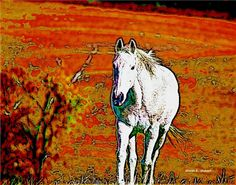 White Horse Art Fauvism Yellow Red Equine by GrayWolfGallery Desert Homes, Fauvism, Horse Art, Folk Art, Ranch, Texas, Magic, Horses, Rustic