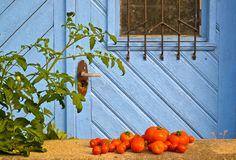 Tomaten vor blauer Tür Pic Sonja Rieser www.sonjarieser.ch Blue Doors, Home And Garden, Tomatoes