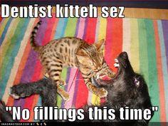 Dentist Kitty is very impressive