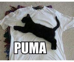 cat, funny, puma
