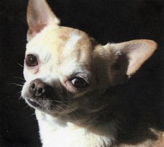 Tiney was our little dog that liked to chase rabbits and kill snakes.