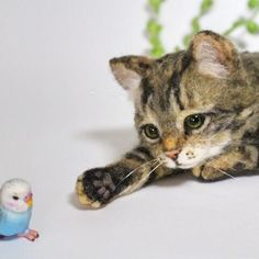 Needle felted kitten and parakeet. Absolutely adorable! By Hinali Hinali from Japan.