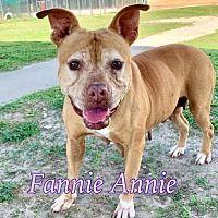 Ocala Florida Boxer Meet Fannie Annie A For Adoption Https Www Adoptapet Com Pet 28750760 Ocala Florida Boxer In 2020 Pet Adoption Pets Boxer