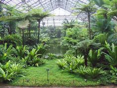 Turn old Bunnings site into bio-dome / public garden site. Tropical Landscaping, Tropical Garden, Tropical Plants, Indoor Water Garden, Indoor Plants, Tropical Greenhouses, Garfield Park Conservatory, Large Greenhouse, Paludarium