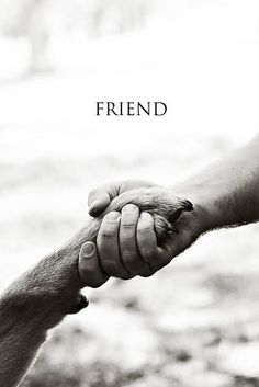 mans best friend I love my dog I Love Dogs, Puppy Love, Mans Best Friend, Best Friends, Friends Forever, Bestest Friend, Loyal Friends, Dog Quotes Love, Dog Best Friend Quotes