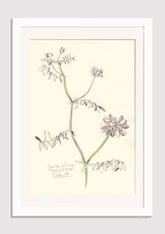 "Flower drawing Violet Vetches #2- pencil and watercolor drawing - ORIGINAL botanical art (8 x 11"") Floral still life by Catalina S.A by CATILUSTRE on Etsy"